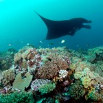 Diving in Fiji – What to expect