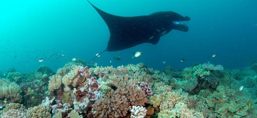 Slider Manta Reef